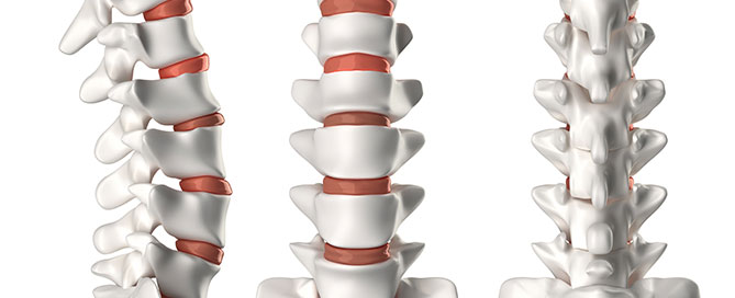 spine anatomy chiropractor fort myers