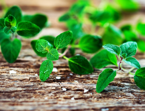 Nature's Super Antioxidant Healer – Oregano