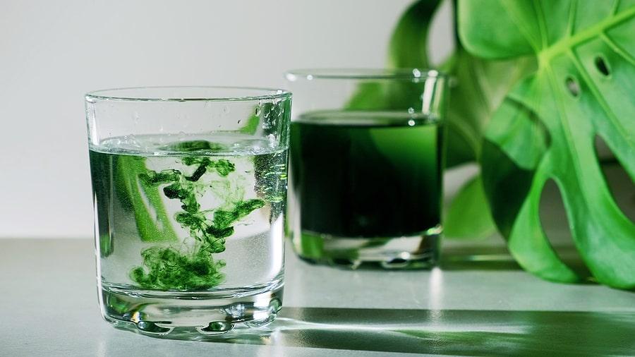 chlorophyll nutritionist dr kaster